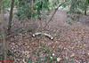 016 Bush stone Curlew Male by Jen 64