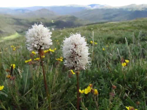 Alpine Tundra, Rocky Mountain National Park