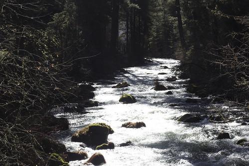 Burney Falls Hikes