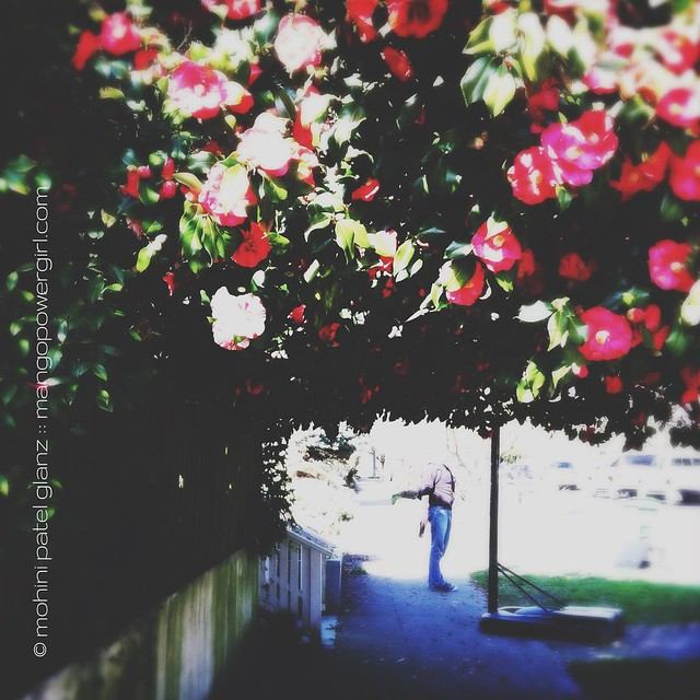 camellia tunnel