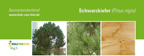 Schwarz-Kiefer-Header