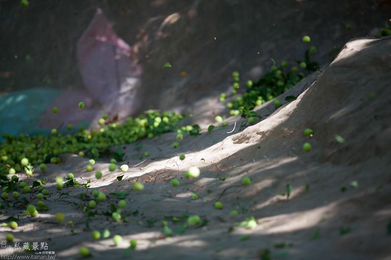 台南私藏景點--南化採梅 (13)