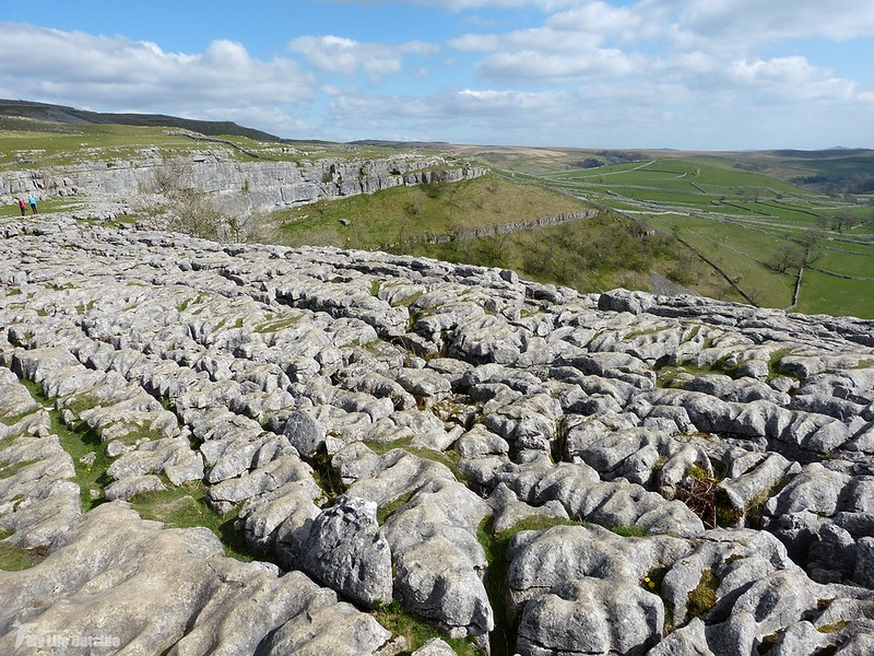 P1070596 - Limestone Pavement, Malham Cove