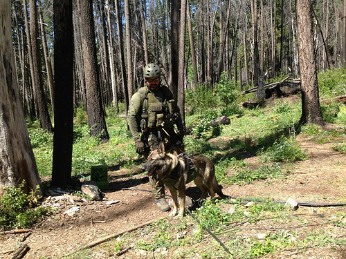 U.S. Forest Service law enforcement officer Carson Harris and his K-9 partner, Jasper, patrol the Shasta-Trinity National Forest in California. (U.S. Forest Service)