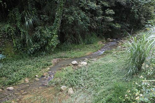 台灣白魚的棲地。(圖片攝影:羅聿)