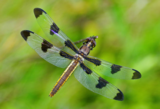 Dragonfly Wisconsin