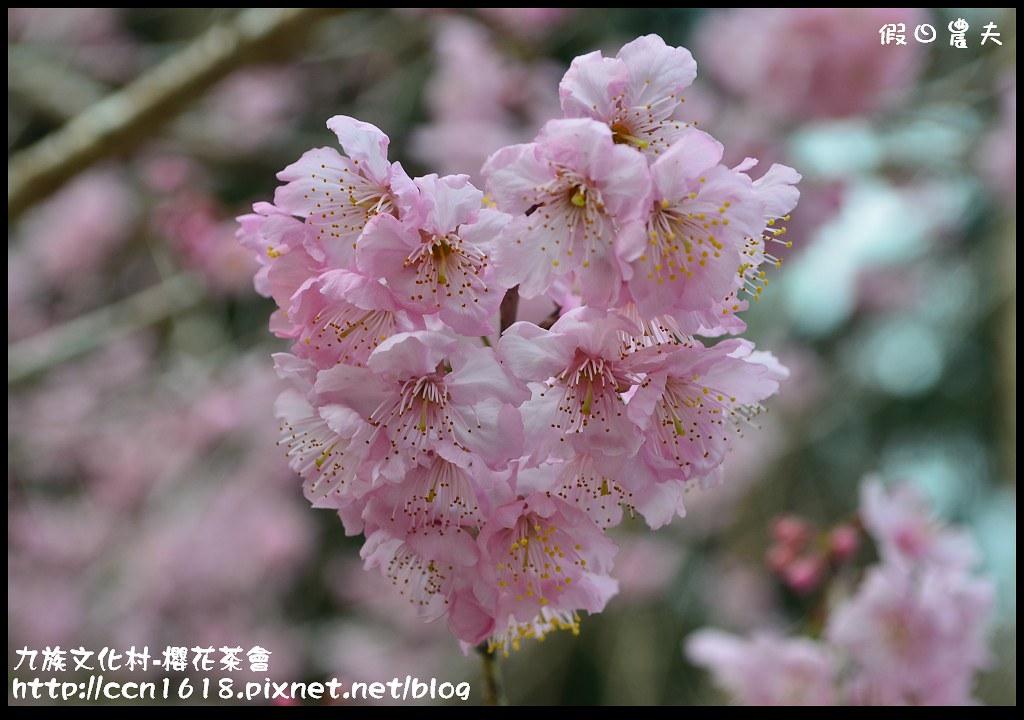 九族文化村-櫻花茶會DSC_4259