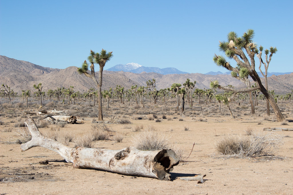 Joshua Tree National Park, Kalifornia