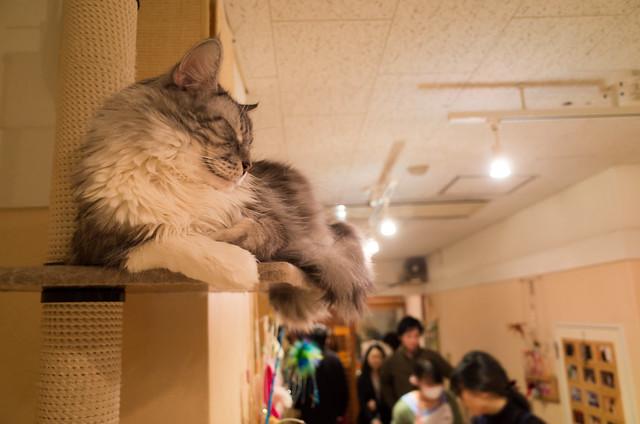 R0003989猫カフェ~ねこ・JaLaLa~