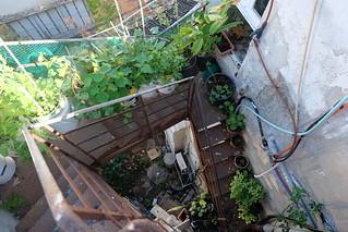 גינת מדרגות - עלייה לגג