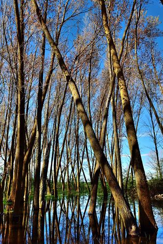 En, Composition, Backlight, Wetland, Campos branch, The Canal of Castile, Valladolid, Spain