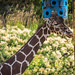 Hogle Zoo-48 by blue_dragon