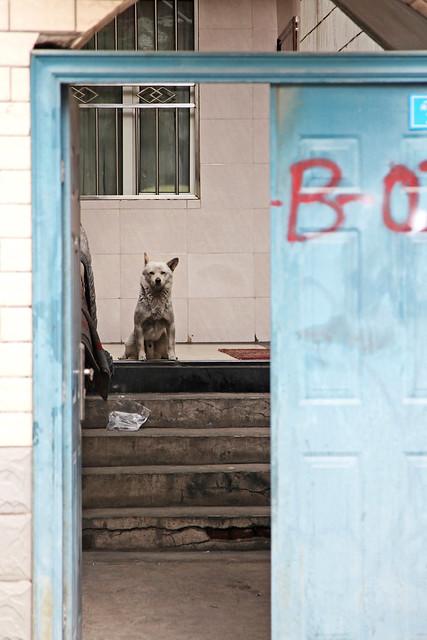 Watchdog behind the door, Urumqi ウルムチ、ドアと犬