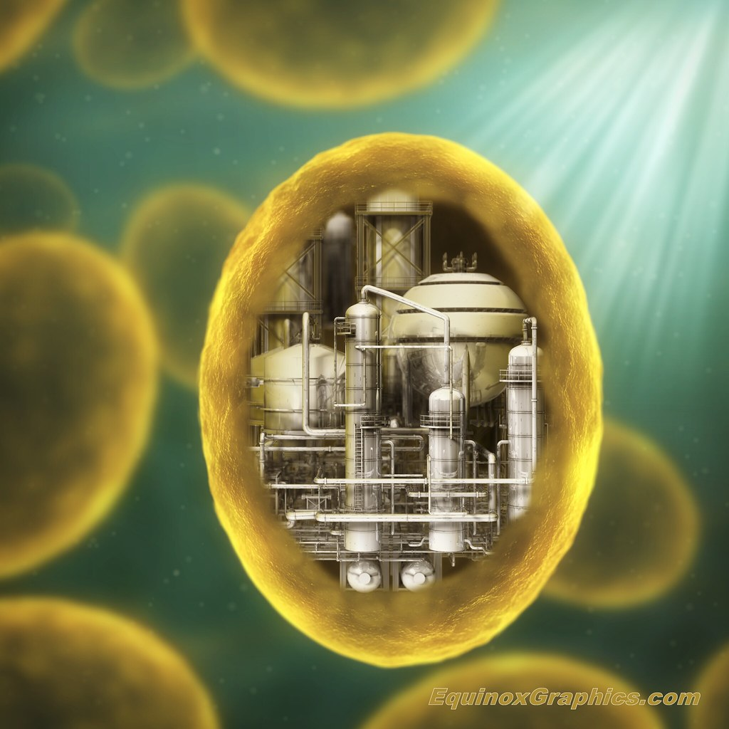 Image:Synthetic Biology - Yeast factory