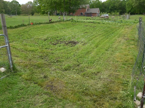 Garden before tilling