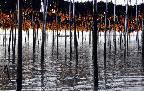 china water fisherman pattern mud farm line kelp area melinda fujian mudflat tideout sundried shoal aquaculture tidalflat shallows 褔建 xiapu chanmelmel 霞浦 灘塗 melindachan 滩涂养殖 曬海帶埸 seawemel