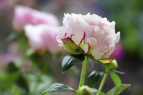 06-13 flowers-4853-Edit-20
