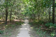 Rocky Point Pine Barrens