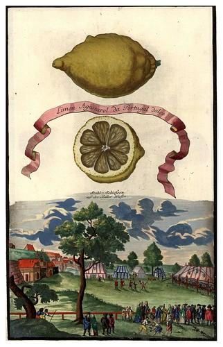 011-Nürnbergische Hesperides-1708-1714- Universitäts- und Landesbibliothek Sachsen-Anhalt