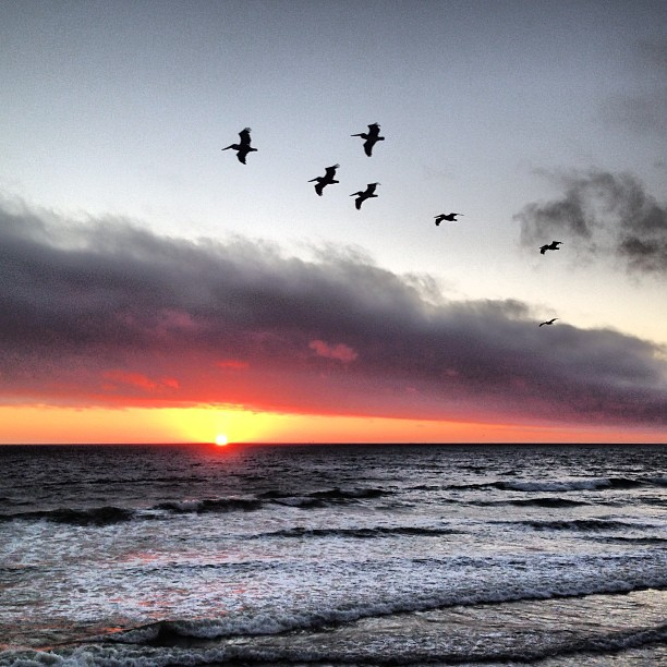 And because a video wasn't enough... #sunset #sf #ocean #waves #birds