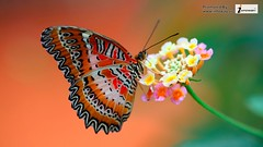 Most Beautiful Butterfly Hd Wallpaper