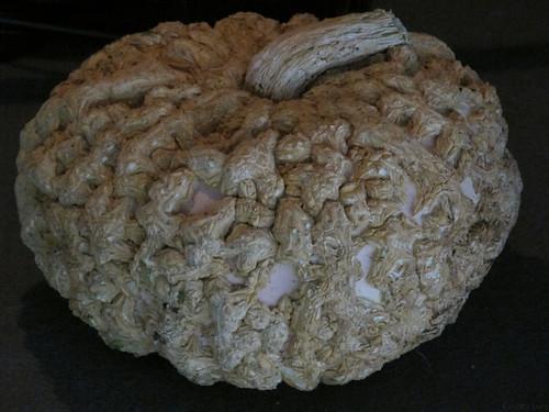 Gnarly heirloom pumpkin by Coyoty
