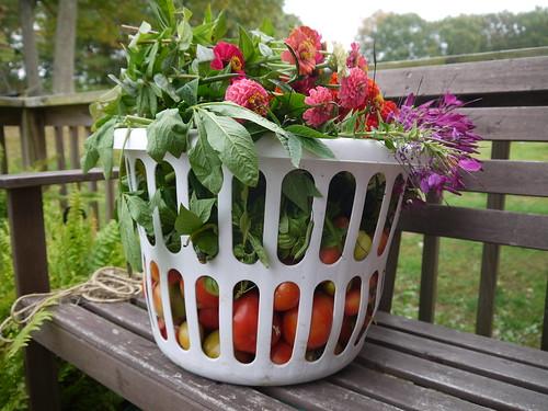 Last Garden Harvest