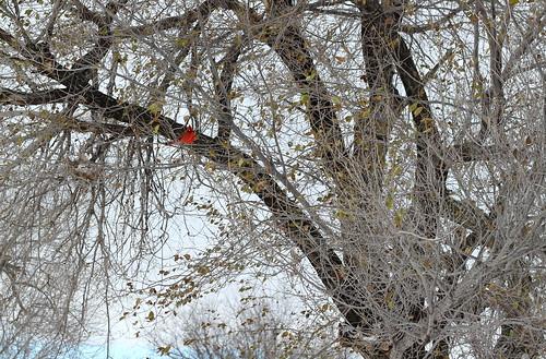 Winter Nature 1