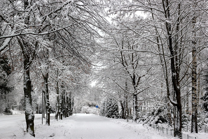 talvikuvia, joulukuu 2013 014