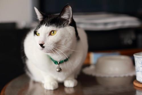 Cat in my home