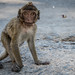 Monkey in Hua Hin Thailand by Fanvanice