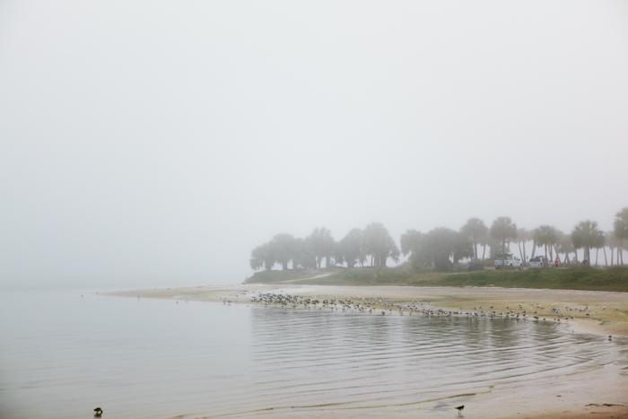 fog (8 of 8)