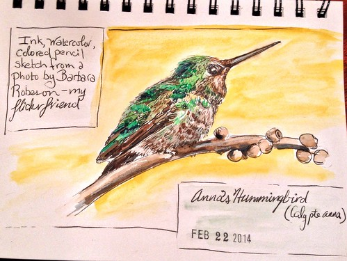 Anna's Hummingbird sketch