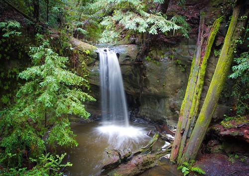 longexposure trees santacruz fern green nature water northerncalifornia landscape waterfall moss rocks scenic roots redwoods californiastatepark bigbasinstatepark sempervirensfalls bigbasinredwood