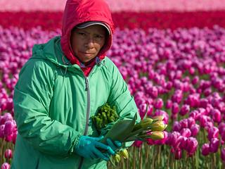 Skagit Valley - Migrant Farm Workers