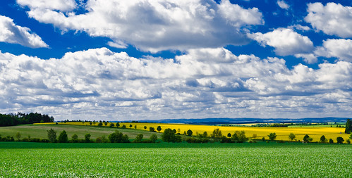 road blue light shadow sky white color tree green nature field yellow clouds way alley colours hill hills rapeseed