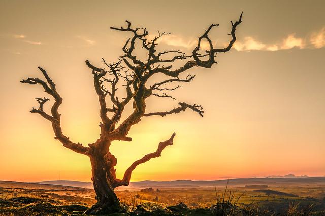 nalamanpics - Surreal Trees - take 4