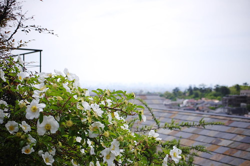flowers and roof