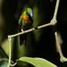 Birds of Northern Peru