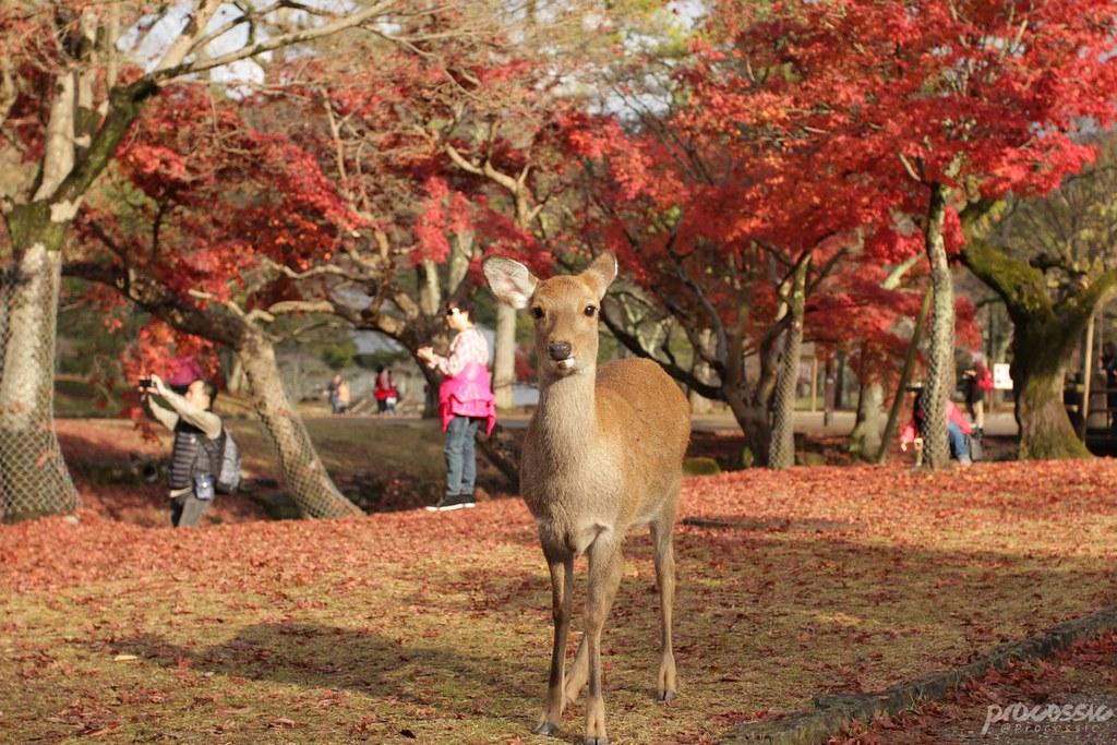 Nara_0050