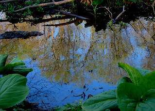 Reflection in Small Pond - Pennsylvania