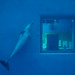 a dolphin's life by contemplative imaging
