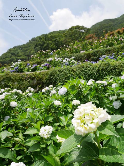 陽明山繡球花大梯田農場 (24)