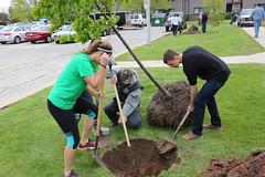 tree-planting-17