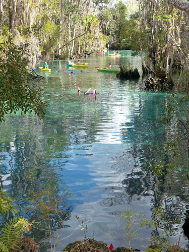 trees people water boats spring stream florida brush crystalriver