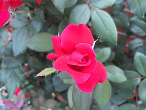 florida gadsdencounty posrus ©lancetaylor