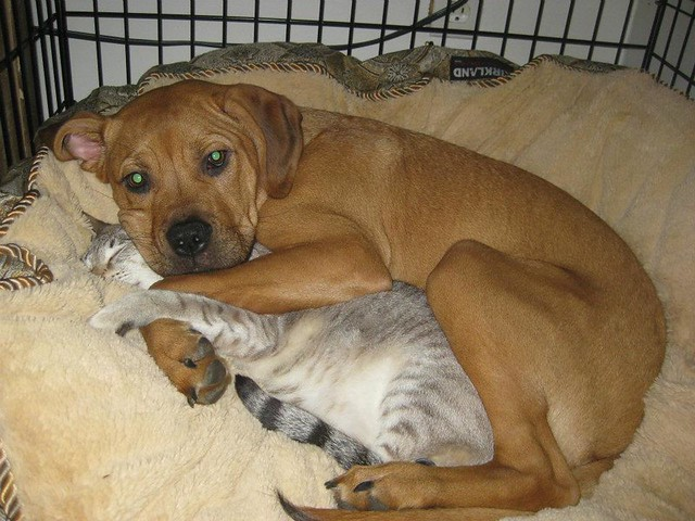 cute-dog-cuddling-a-cat