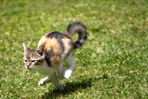 Running Cat by monkeykong