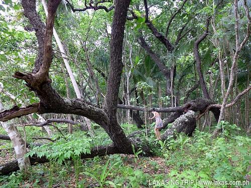 Fallen tree along the trail