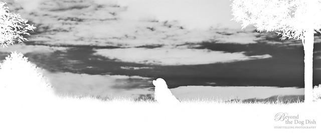 20130621-024_web960_white